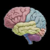 App Icon: 3D Brain