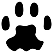 App Icon: PAW Server für Android