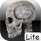 Human bones lite