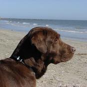 App Icon: Hundestrände 2.8.2