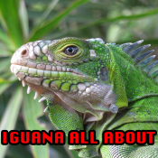 App Icon: Iguana All About 1.2